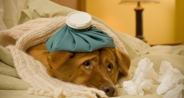 How to Care for a Sick Dog