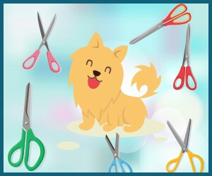 Best-Dog-Grooming-Scissors-2018